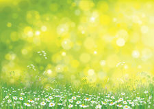 传染媒介夏天自然背景 免版税库存照片