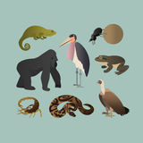 传染媒介套不同的非洲动物 非洲大草原大猩猩,天蝎座,扭转球的金龟子的动物 免版税库存图片