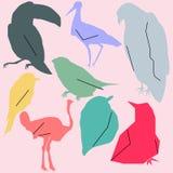 传染媒介套不同的鸟 免版税图库摄影