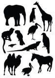 传染媒介套动物黑剪影  免版税库存图片