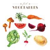 传染媒介套在白色背景的水彩新鲜蔬菜 皇族释放例证
