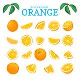 传染媒介套成熟热带橙色果子 桔子剥了皮,半切片叶子片断  可口柑橘的汇集 免版税库存照片