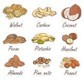 传染媒介套手在白色背景被画的样式在手中速写了坚果:榛子,杏仁,花生,核桃,腰果,松果 库存照片
