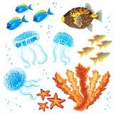 传染媒介套热带鱼,水母。 免版税库存图片
