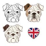 传染媒介套英国牛头犬的面孔和心脏下垂英国 手d 库存例证
