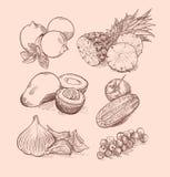 传染媒介套水果、菜、莓果和柑橘 免版税库存图片