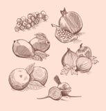 传染媒介套水果、菜和莓果 免版税库存照片