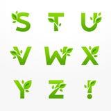 传染媒介套绿色eco在与叶子的商标上写字 生态fon 免版税库存照片