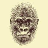 传染媒介猴子 库存例证