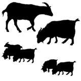 传染媒介山羊剪影的汇集 免版税图库摄影