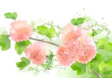 传染媒介水彩开花八仙花属 向量例证
