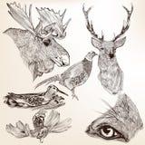 传染媒介手拉的动物的汇集设计的 免版税库存图片