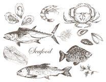 传染媒介手拉的海鲜集合 免版税图库摄影