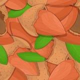 传染媒介无缝的样式杏仁坚果 被剥皮的坚果的例证和在白色背景隔绝的壳可以使用它 免版税库存图片