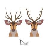 传染媒介有角的鹿头集合 平,动画片样式对象 免版税库存图片