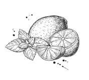 传染媒介柠檬和薄菏 背景查出的白色 向量例证