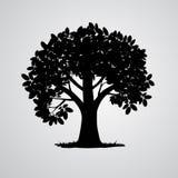 传染媒介黑树剪影 免版税库存图片