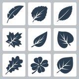 传染媒介树留给象被设置 免版税库存图片