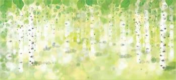 传染媒介桦树森林 免版税图库摄影