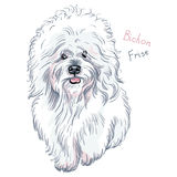 传染媒介白色逗人喜爱的狗Bichon Frise品种 库存例证