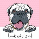 传染媒介滑稽的动画片行家狗Bullmastiff 库存照片