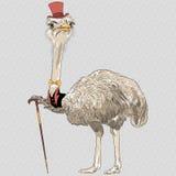 传染媒介滑稽的驼鸟鸟行家 库存例证