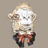 传染媒介滑稽的骆驼行家特写镜头画象  向量例证