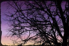 传染媒介背景树枝 库存照片