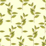 传染媒介绿色植物无缝的样式背景 免版税图库摄影
