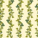传染媒介绿色植物无缝的样式背景 库存图片