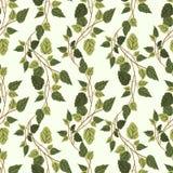 传染媒介绿色植物无缝的样式背景 图库摄影