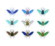 传染媒介色的甲虫 库存图片