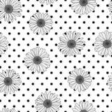 传染媒介花卉无缝的圆点样式 与概述手拉的春黄菊花的黑白背景 库存图片