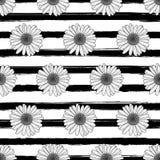传染媒介花卉无缝的条纹图形 与概述手拉的春黄菊花的黑白背景 免版税库存照片