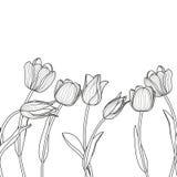 传染媒介花卉无缝的水平的样式 黑色白色 库存照片