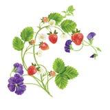 传染媒介草莓 库存图片
