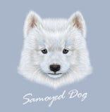 传染媒介萨莫耶特人狗被说明的画象  免版税库存照片
