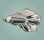传染媒介葡萄酒鱼 免版税库存照片