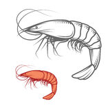 传染媒介虾商标 免版税库存图片