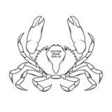 传染媒介螃蟹例证 免版税库存图片