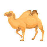 传染媒介被隔绝的例证骆驼 库存图片