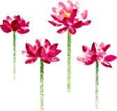 传染媒介设置与红色水彩莲花 免版税库存图片