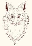 传染媒介画象Fox 库存照片