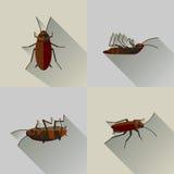 传染媒介长的阴影死的蟑螂集合臭虫 免版税图库摄影