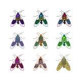 传染媒介颜色甲虫 图库摄影