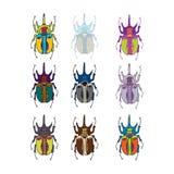 传染媒介颜色甲虫 库存图片