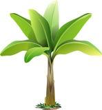 传染媒介香蕉树 免版税库存图片