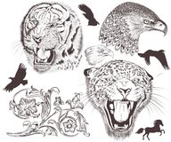 传染媒介高详细的动物的汇集设计的 免版税库存图片