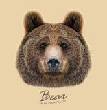 传染媒介Bear on灰棕色背景被说明的画象  库存照片