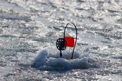 传染性的掠食性鱼的冬天钓具在河的冰 免版税库存照片